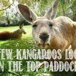 Australian Slang Australian Expressions Hilarious