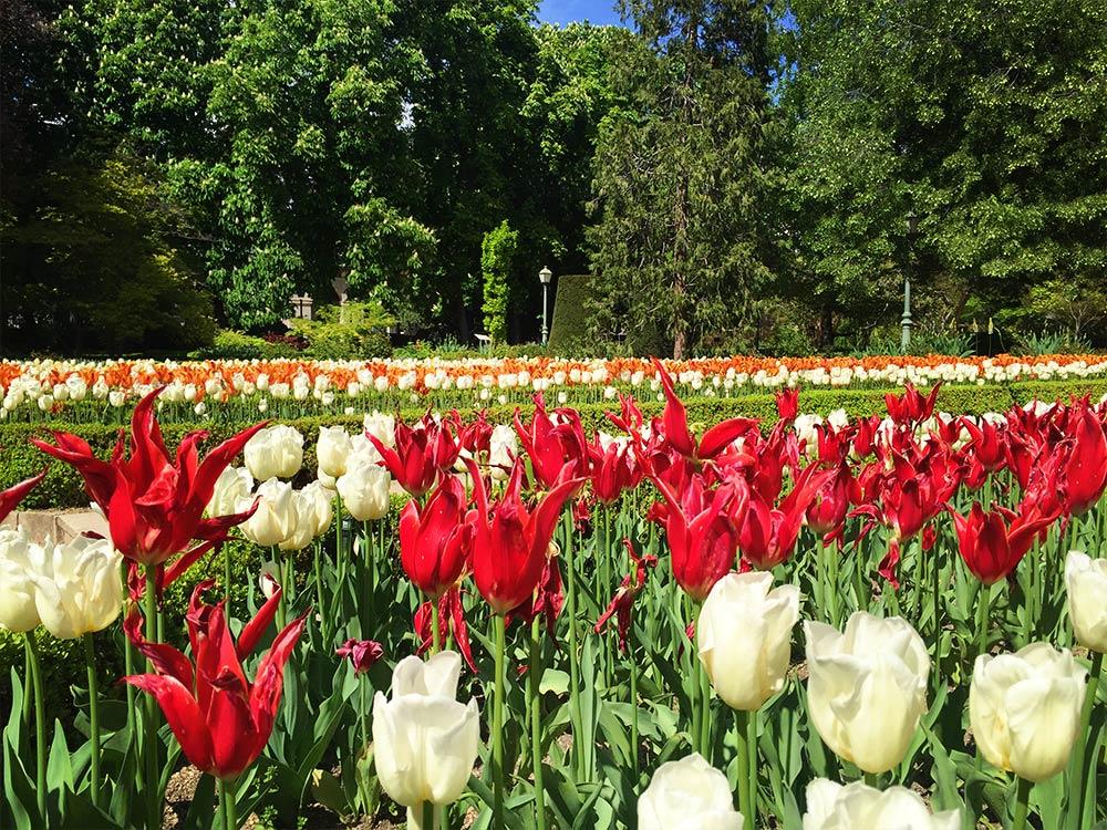 Real Jardin Botanico Tulips Spain