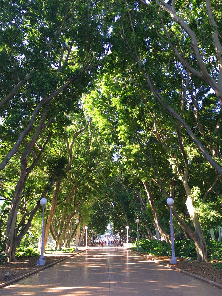 things-to-do-in-sydney-on-a-budget-hyde-park-fig-trees