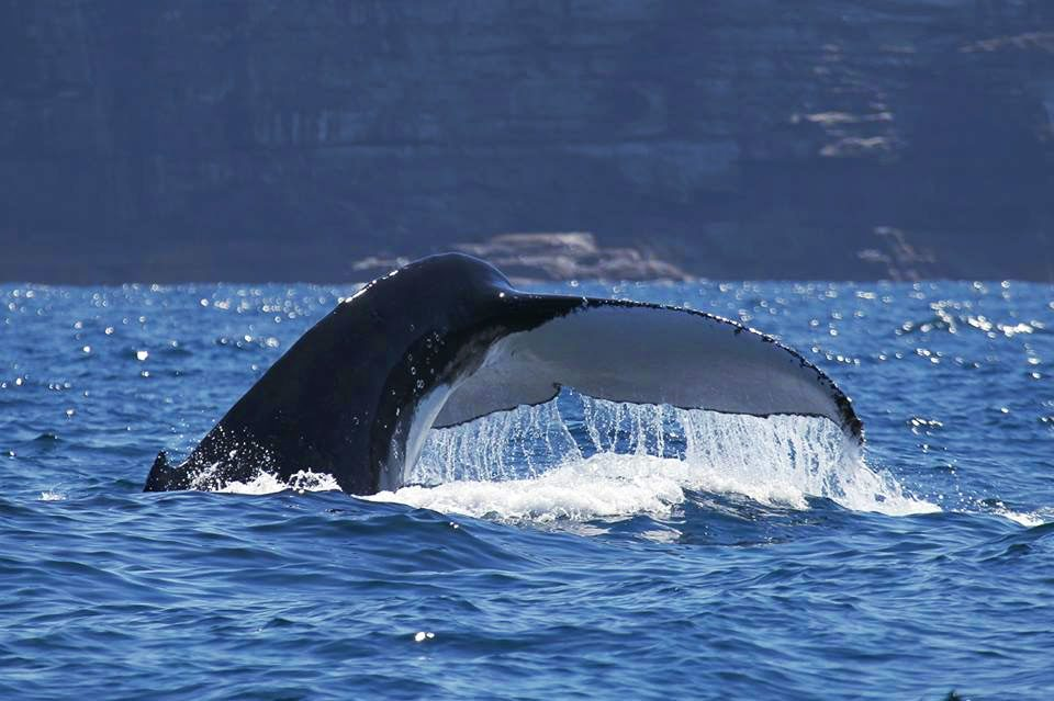 things to do in sydney on a budget whale watching