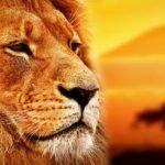 lion king names and lyrics