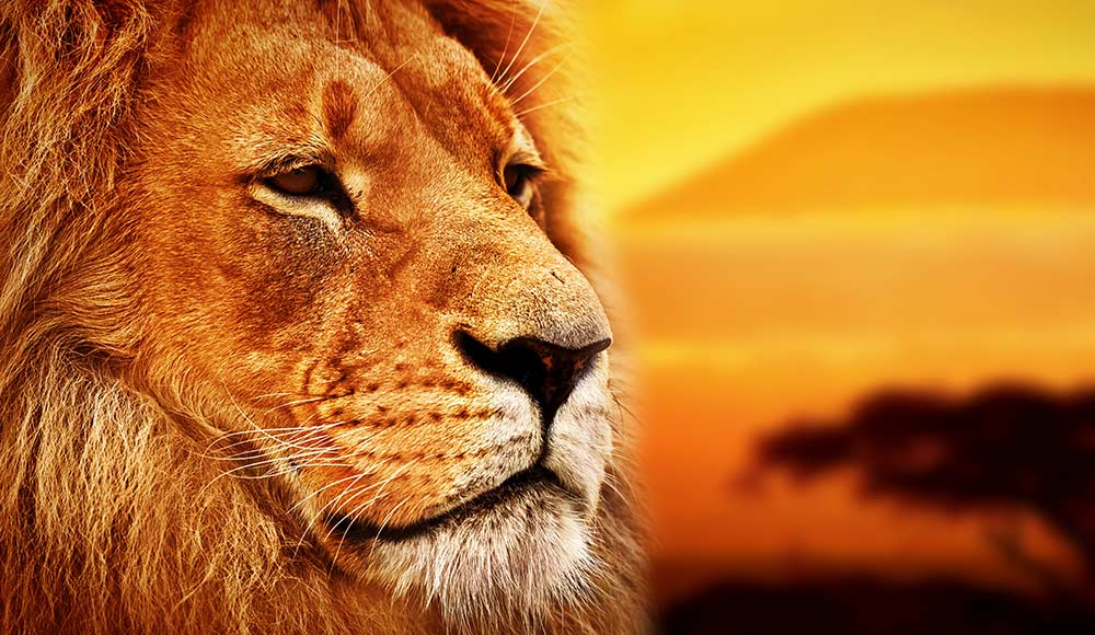 20 Beautiful African Words in 'The Lion King' That'll Make